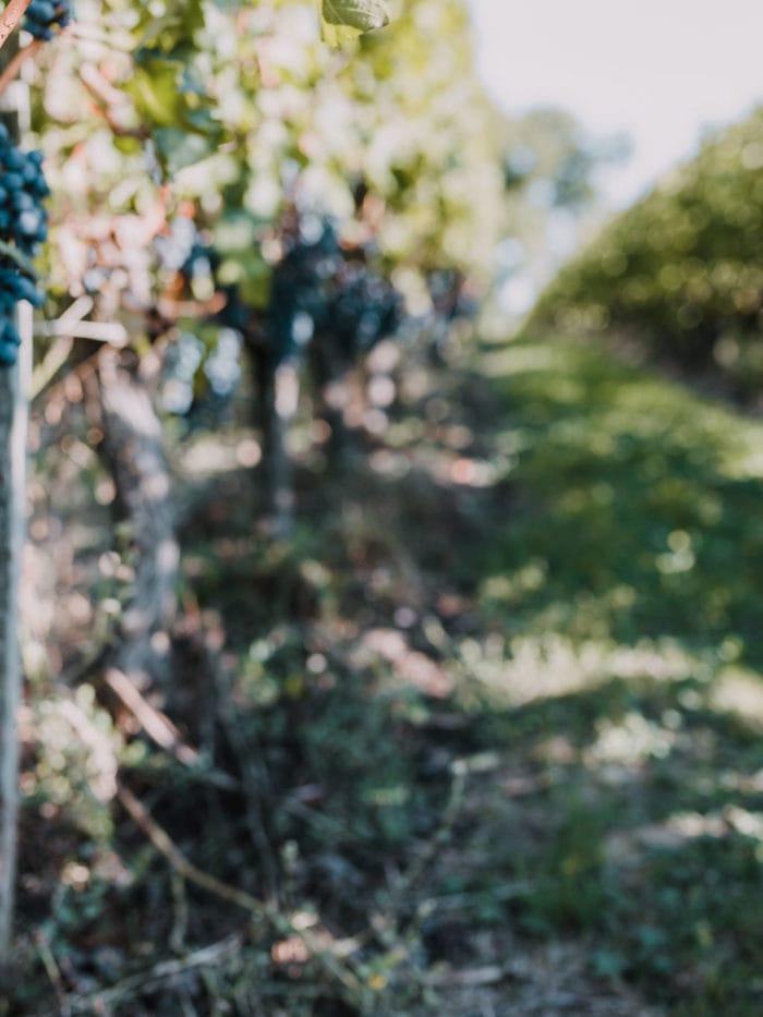 2020: Année de tous les défis pour les vignobles Invindia